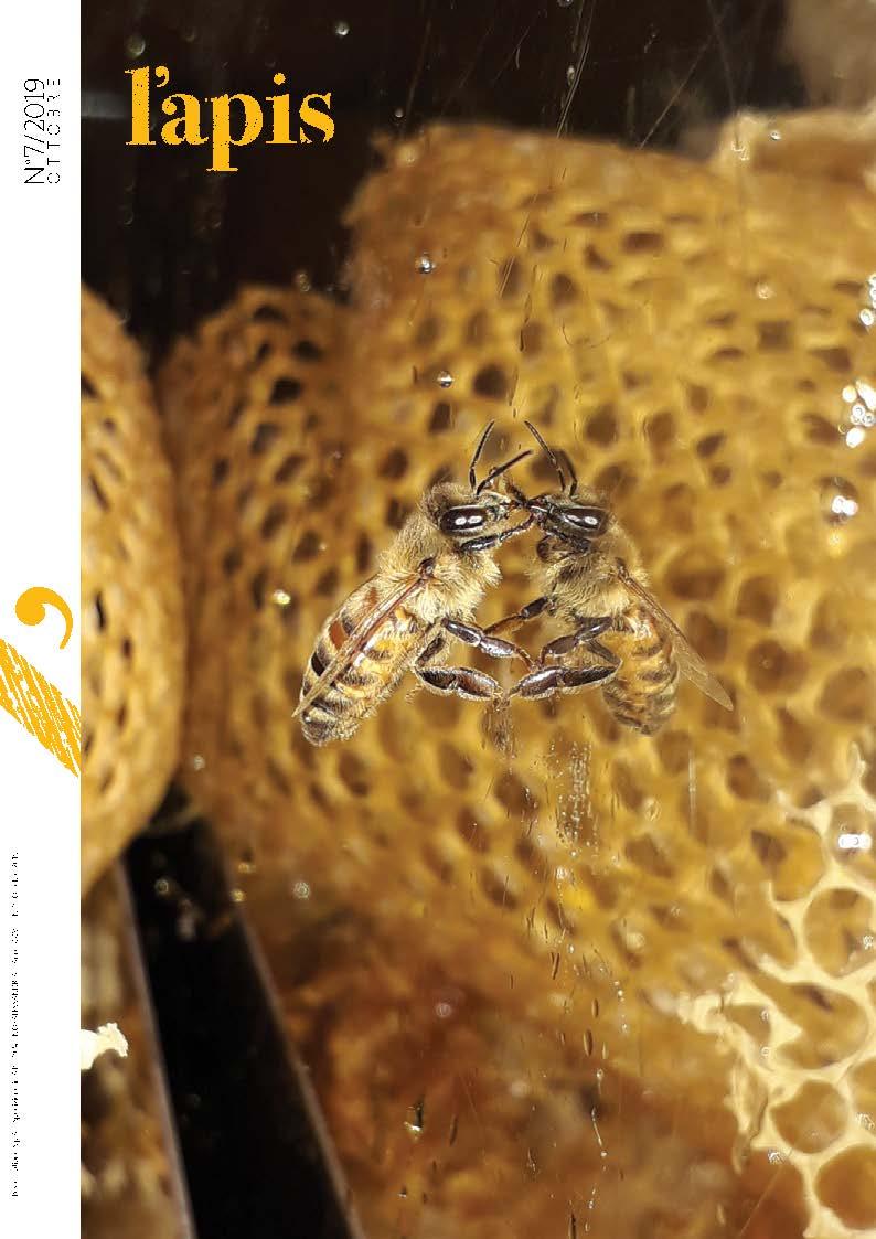 LAPIS 7 19 COPERTINA