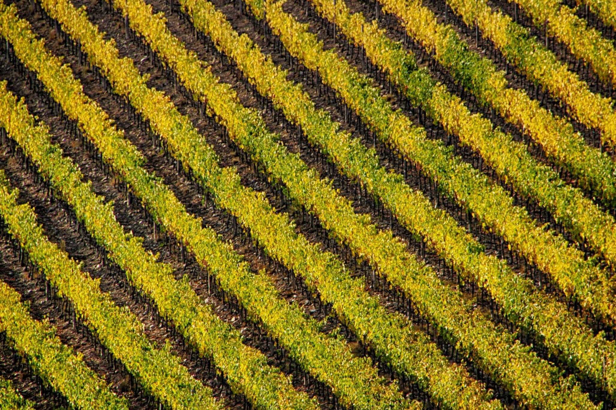 Per far rifiorire l'agricoltura fertile. Una nuova Pac con e per gli impollinatori – Agricoltura e api