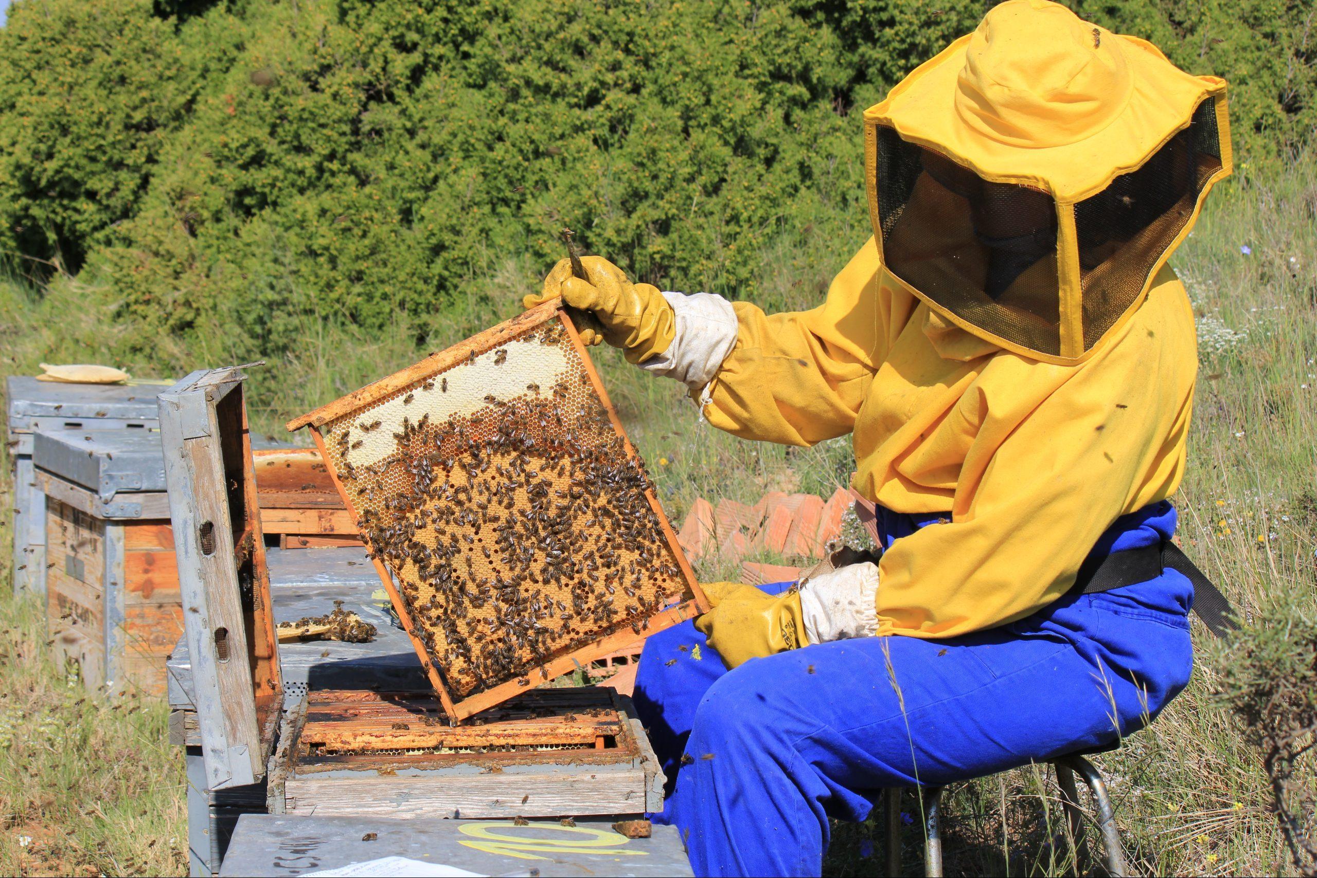 L'apicoltura in terra iberica: l'avventura di un apicoltore italiano – Apicolture nel Mondo